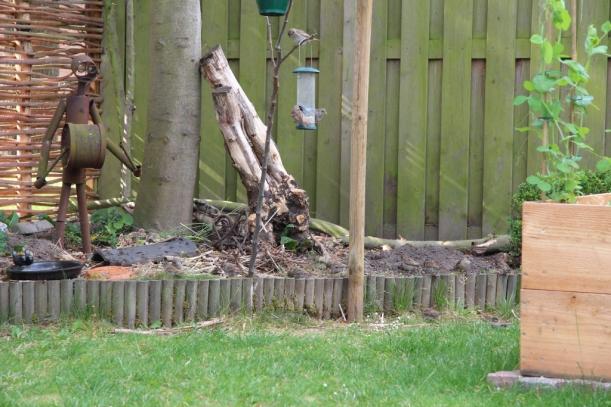 Mussen in de tuin